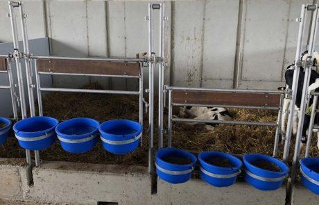 gvanbeekenzn_calfcaresystem_projecten_Sunshinedairyfarm_calves