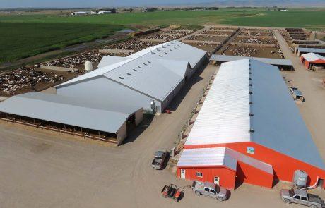 G van Beek Huigenbos Cattle Alberta Fort-Macleod Calf Care System